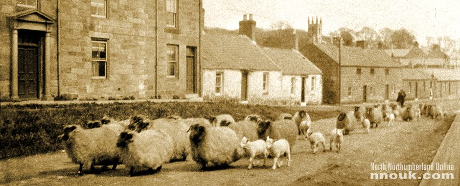 Sheep on West Street, Belford